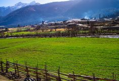 Alpine pasture in Tibet stock photography