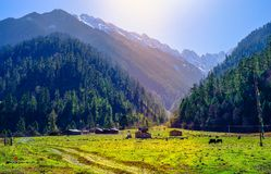 Alpine pasture in Tibet stock photos