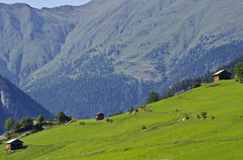 Alpine pastures Stock Photography