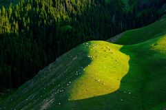 Alpine pastures Royalty Free Stock Images