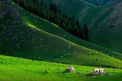 Alpine pastures Royalty Free Stock Image