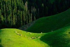 Alpine pastures Stock Images
