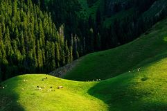 Alpine pastures Royalty Free Stock Image