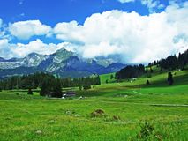 Alpine pastures and meadows on the slopes of the Alviergruppe mountain range. Canton of St. Gallen, Switzerland stock photo