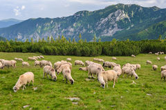 Alpine pastures in Retezat National Park Stock Photography