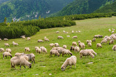 Alpine pastures in Retezat National Park Stock Photo