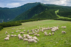 Alpine pastures in Retezat National Park Royalty Free Stock Photography