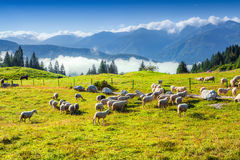 Alpine pastures in the Slovenia Royalty Free Stock Photo