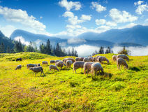 Alpine pastures in the Slovenia, Julian Alps. Royalty Free Stock Photography
