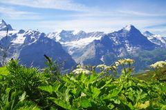 Alpine peaks of Grindelwald and Jungfrau. Landskape background of Bernese highland. Alps, tourism, journey, hiking