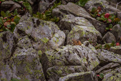 Alpine pika mouse hiding on a heap of stones Stock Photo