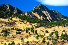 Alpine Pine Trees on a Sunny Day with Jagged Mountains in the Ba. Ckground and a Yellow Grass Field royalty free stock photos