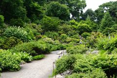 The Alpine Plant Garden in Hokkaido University Botanical Garden. Alpine Plant Garden, Hokkaido University Botanical Garden, Chuo-ku, Sapporo, Hokkaido, Japan stock photography