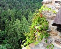 Alpine plants Royalty Free Stock Photos