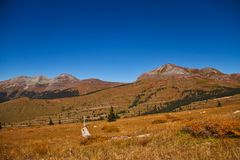 Alpine Prairie. A last fall alpine prairie in the Rocky Mountains royalty free stock photos