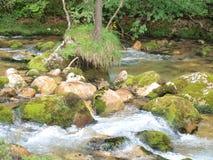 Alpine river Pießling. Windischgarsten, Austria Royalty Free Stock Photography