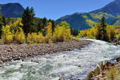 Alpine river and yellow aspen Royalty Free Stock Photography