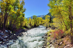 Alpine river and yellow aspen Stock Images