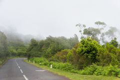 Alpine road in Madeira island Royalty Free Stock Image