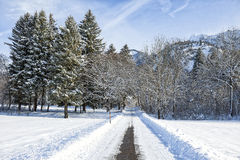 Alpine road in winter scenery Royalty Free Stock Photography