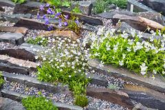 Alpine Rock Garden Royalty Free Stock Image