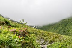 Alpine rose bush and mist in a valley in the Alps, Austria.  royalty free stock images