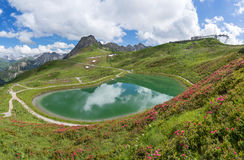 Alpine roses at the lake Riezler Alpsee Stock Photo