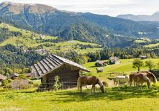 Alpine rural landscape with grazing horses in Austria. Alpine rural landscape with grazing horses. Western Carinthia, Austria Stock Images