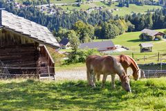 Alpine rural landscape with grazing horses in Austria. Alpine rural landscape with grazing horses. Western Carinthia, Austria Stock Photos