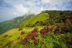 Alpine Savannenwiese Stockfoto