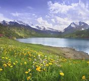 Alpine scene. The hills with dandelions on the swiss alpine lake Royalty Free Stock Image