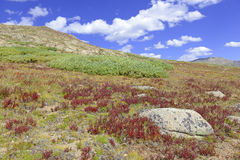 Alpine scene with Autumn colors in the tundra Royalty Free Stock Photo