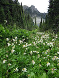Alpine Scene with Avalanche Lilies Royalty Free Stock Photography