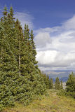 Alpine scene in the Rocky Mountains, USA Royalty Free Stock Photography