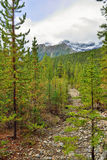 Alpine scenery along the Icefields Parkway between Jasper and Banff in Canadian Rockies Stock Photography