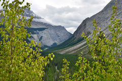 Alpine scenery along the Icefields Parkway between Jasper and Banff in Canadian Rockies Royalty Free Stock Images