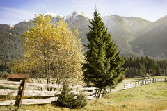 Alpine scenery in the Austrian Tirol. With a view along a rustic wooden fence with a colorful yellow autumn tree through farmland to high mountain peaks and Stock Photography