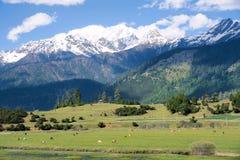 Alpine scenery Stock Photos