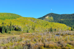 Alpine scenery of yellow and green aspen and mountains during foliage season Royalty Free Stock Photos