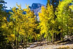 Alpine See-Spur Stockfoto