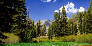 Alpine. Shot in the Desolation Wilderness near Lake Tahoe Stock Photography