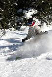 Alpine skier Stock Photos