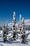 Alpine slope with pine tree Stock Photos