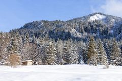 Alpine in the snow stock image