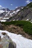 Alpine springtime. Green juniper trees, snow and blue sky Stock Images