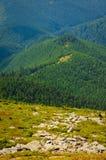Alpine Steigung Lizenzfreie Stockbilder
