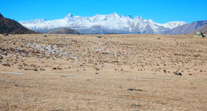 Alpine steppe Royalty Free Stock Photo