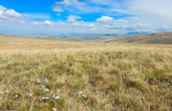 The alpine steppe in the mountains of central Asia Royalty Free Stock Photos