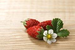 Alpine strawberry (Fragaria vesca) Royalty Free Stock Image