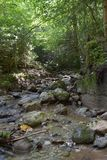Alpine stream in the forest. In Austria, near Admont royalty free stock photos